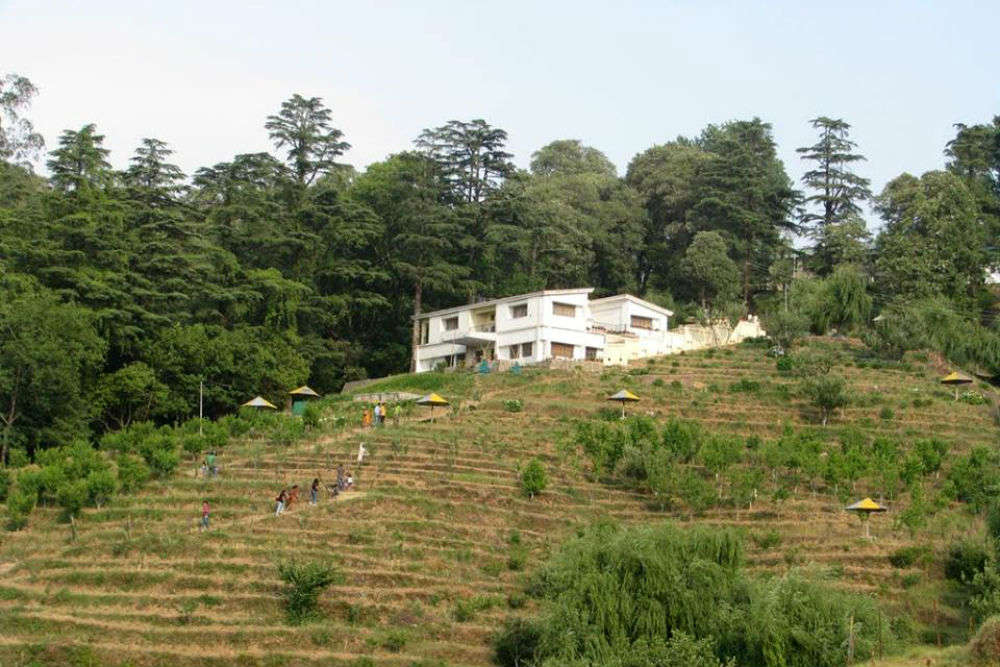 Chaubatia Garden