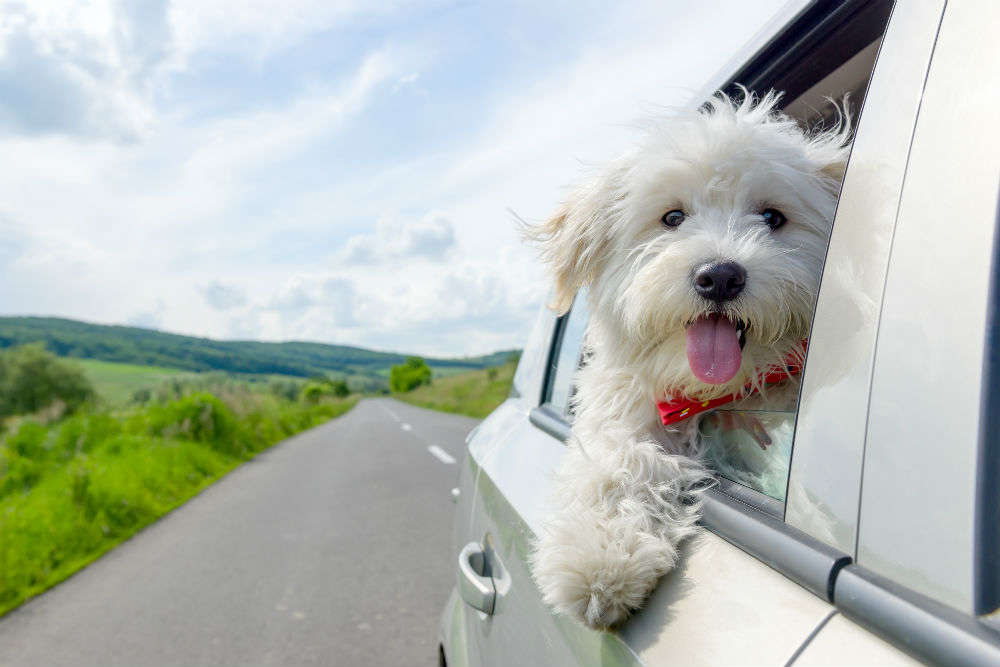 Tips for travelling with pets: all you need to do or avoid doing