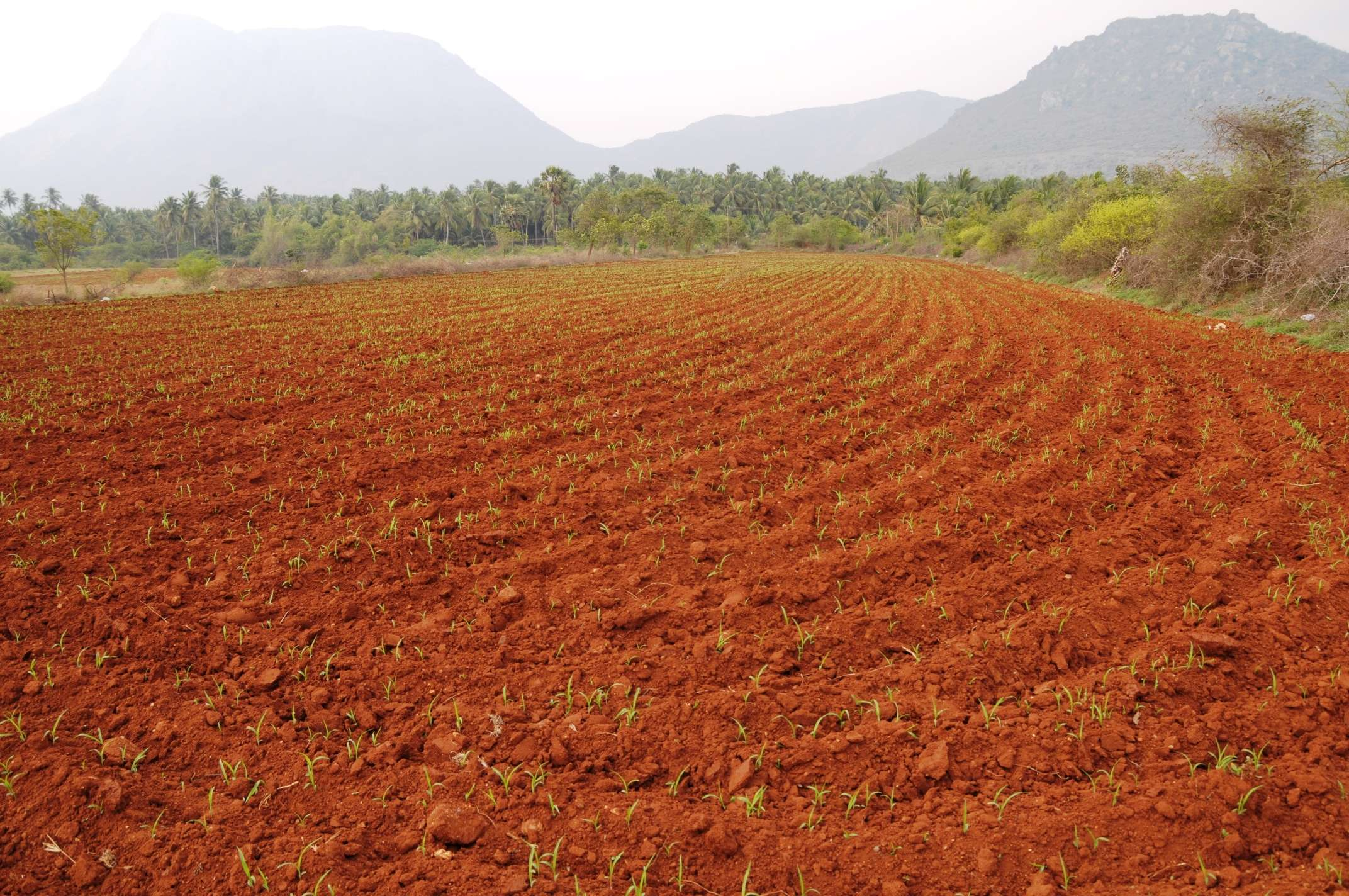 Plough or lease land karnataka tells farmers bengaluru for Soil gurgaon