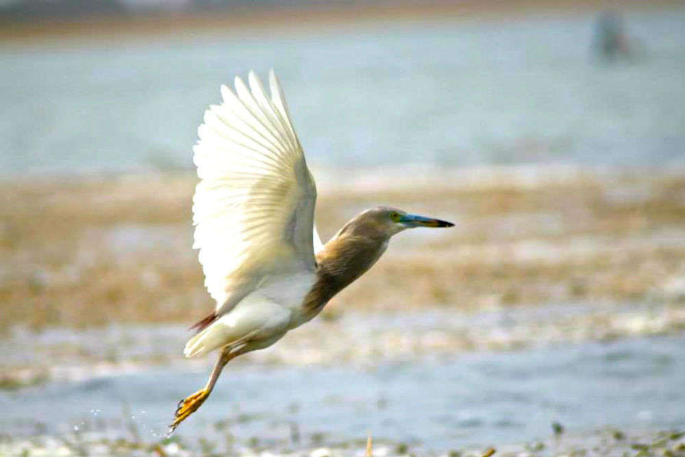 Places to visit in India to spot migratory birds