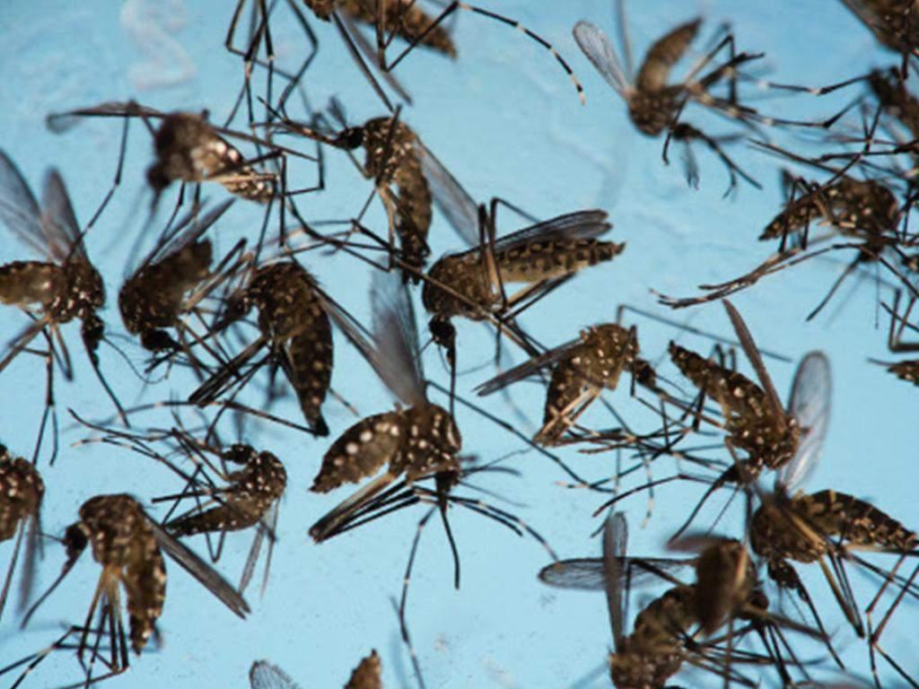 Dengue: Stalin wants TN health secretary to check if nilavembu causes infertility - Times of India