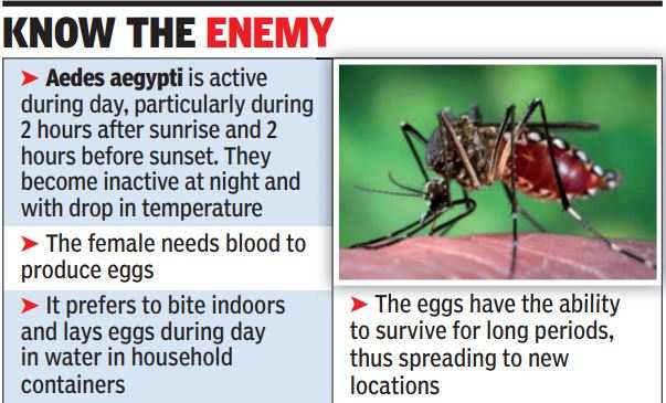 Dengue mosquitoes now active also at night: Experts