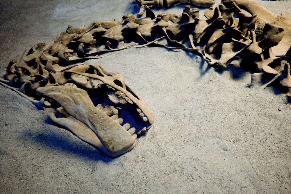 150-million-year-old dinosaur fossil found in Gujarat