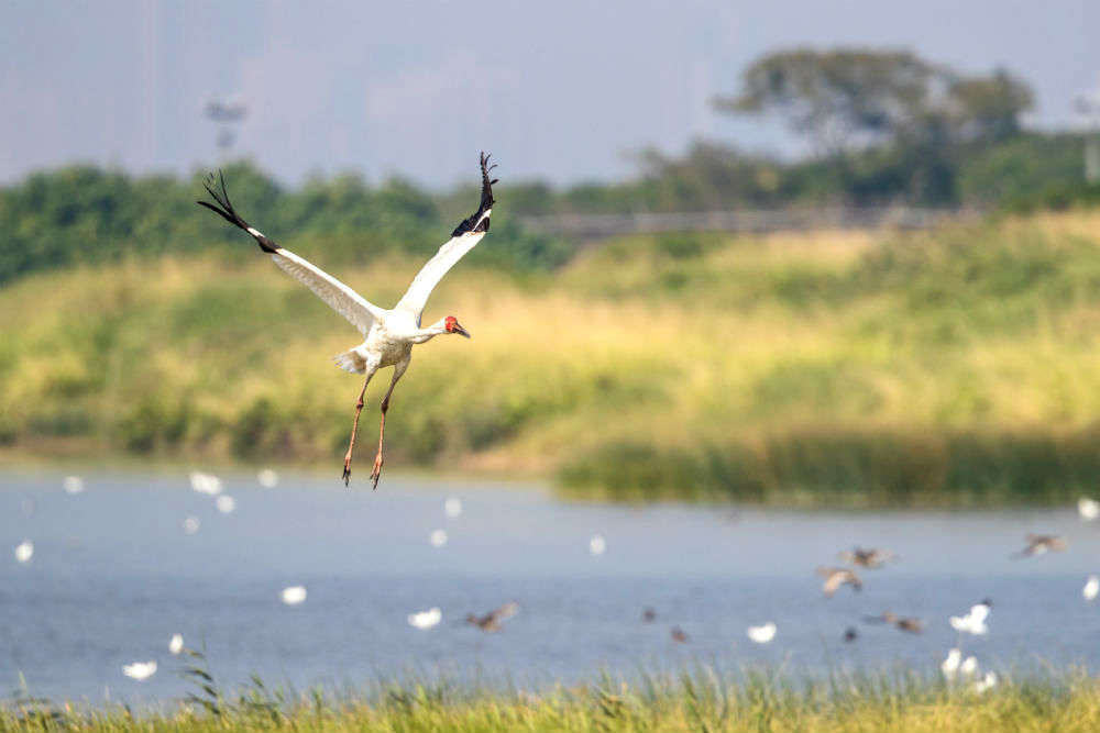 Why have migratory birds still not arrived in Keetham bird sanctuary in North India?