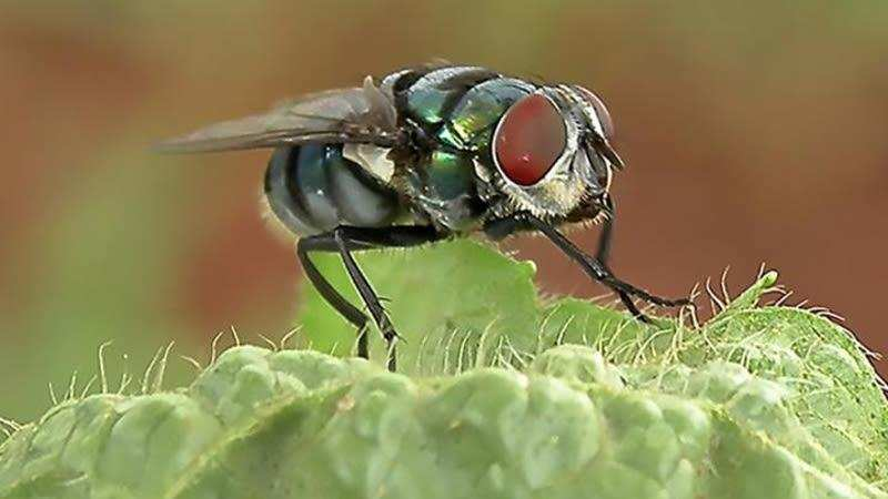 Houseflies could carry hundreds of harmful bacteria - Times of India