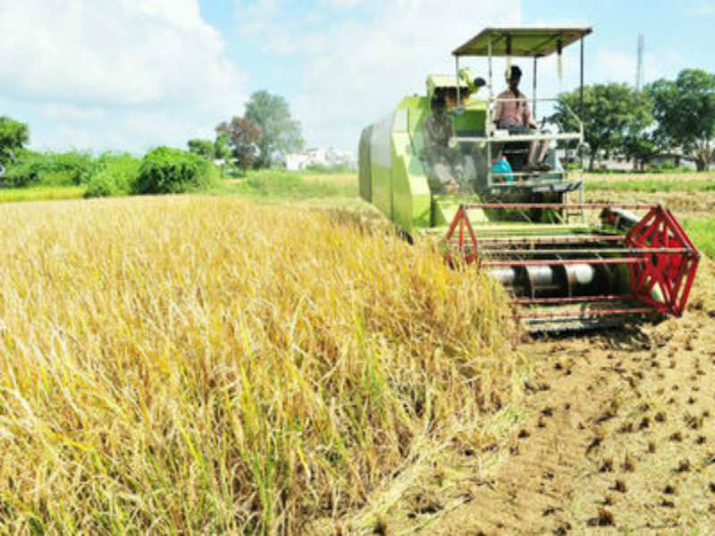 Madhya Pradesh: Wheat sowing, production may go down this year in MP