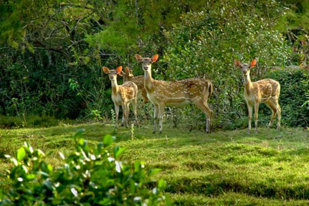 Tourist entry banned at Odisha's Bhitarkanika National Park for a week; here's why