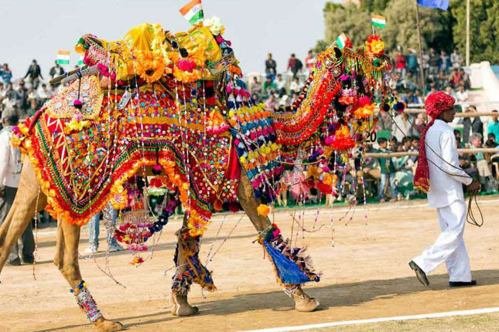 Discover Rajasthan: a two-day Bikaner Camel Festival promises a lifetime of memories