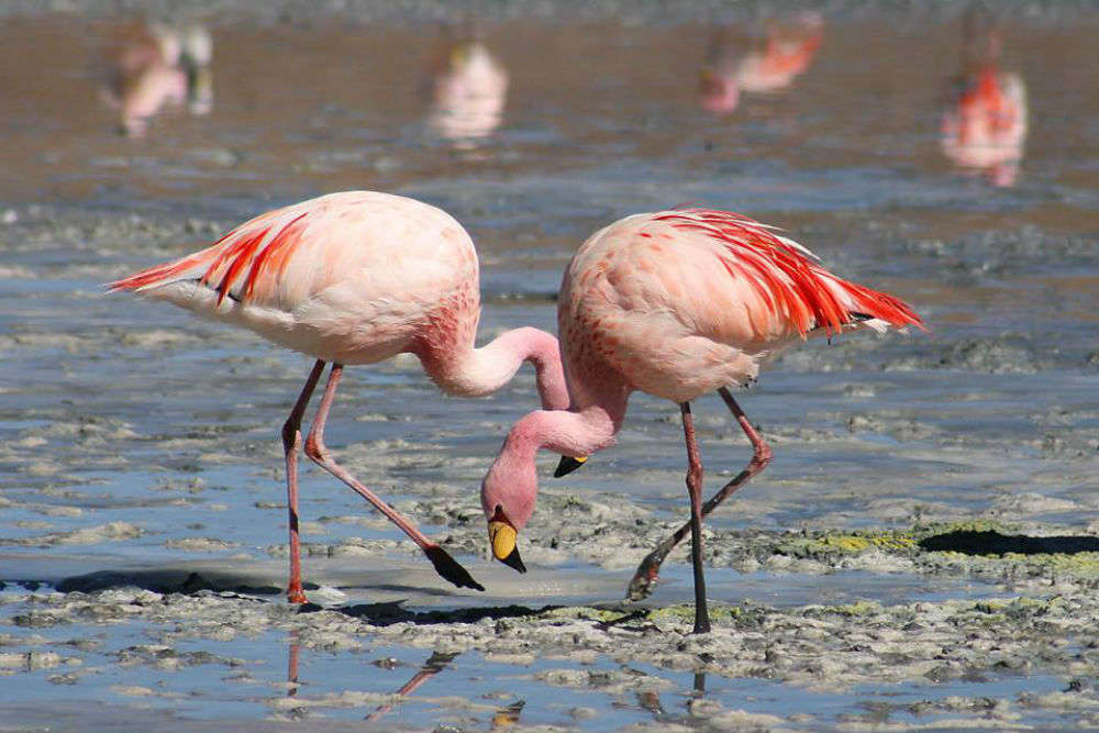 Nellore flamingo festival begins in Andhra Pradesh to promote bird-watching tourism