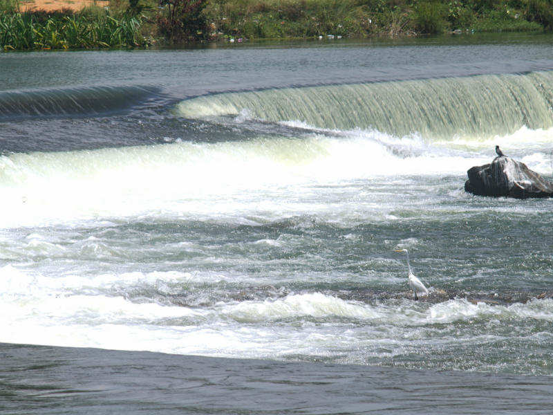 Karnataka rejects Tamil Nadu's plea for release of Cauvery water - Times of India