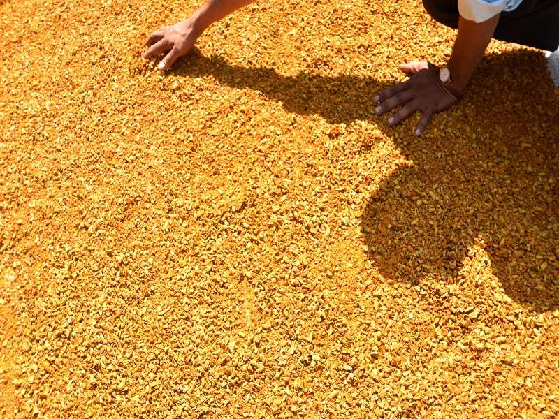Memory loss: Turmeric may help boost memory, lower Alzheimer's risk: Study