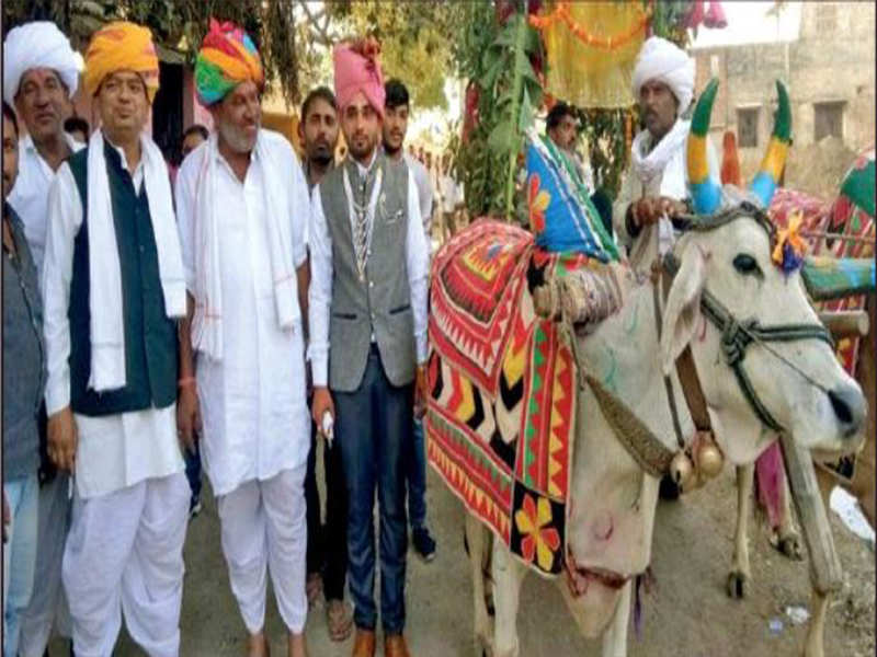 Wedding procession at bullock cart a wedding procession on bullock wedding procession at bullock cart a wedding procession on bullock carts jaipur news times of india junglespirit Images
