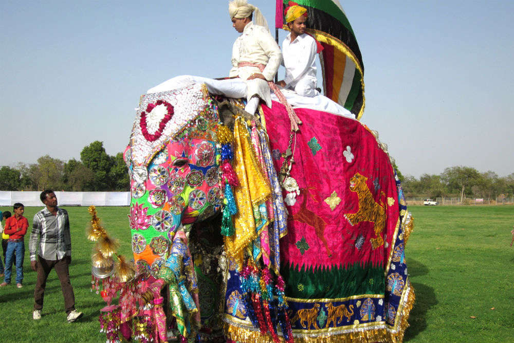 This Holi, do not miss the Elephant Festival in Jaipur