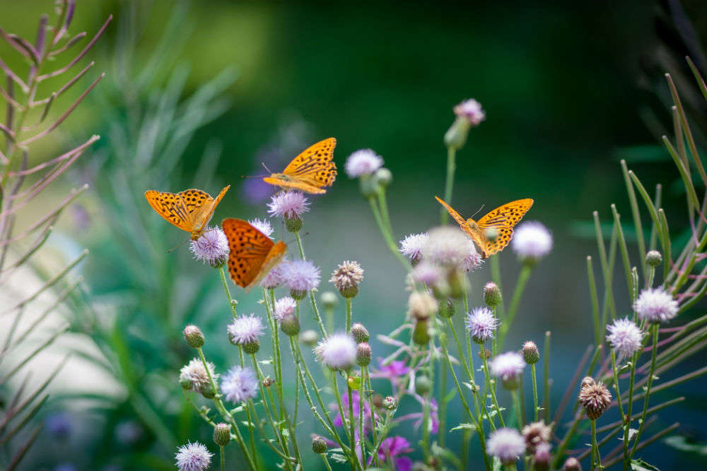 Madhya Pradesh's first butterfly park opens for public in Raisen