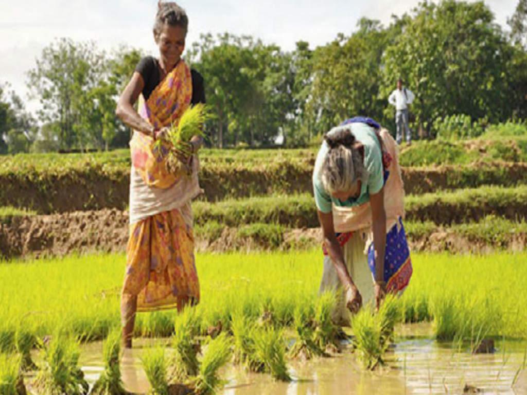 sadhu singh dharamsot: Govt to give Rs 2 lakh sandalwood saplings to