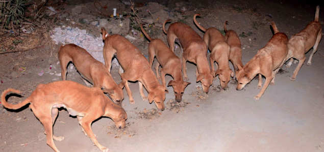 Gujarat news: In this Gujarat village, canines are