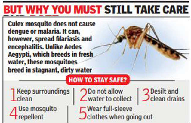 Sting Op Harmless Mosquitoes Bug