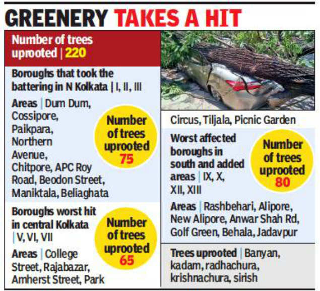 Squall uproots over 200 trees
