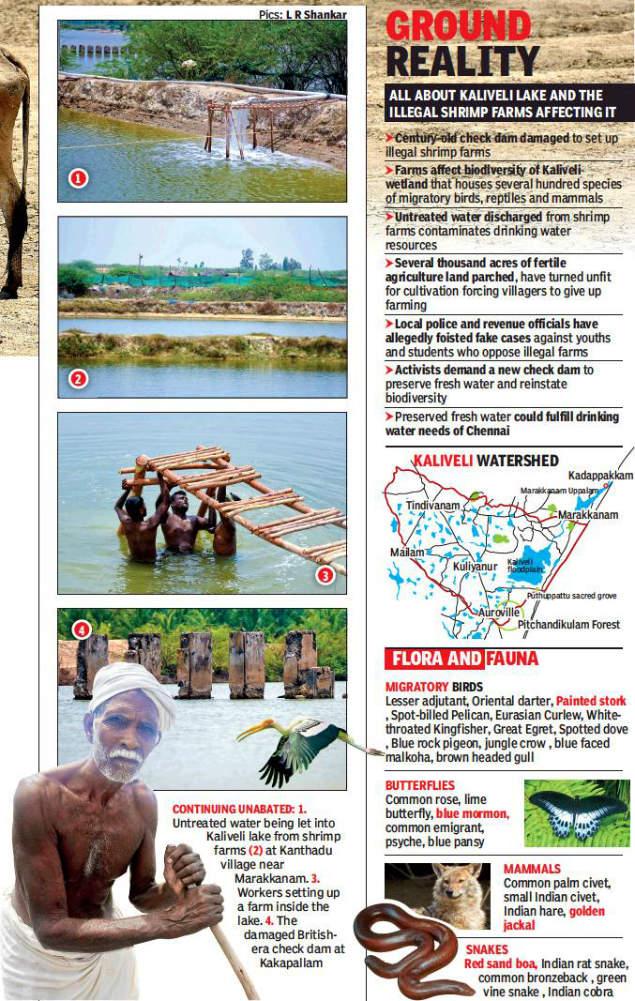 Shrimp farming leaves floodplain dry as bone | Chennai News - Times