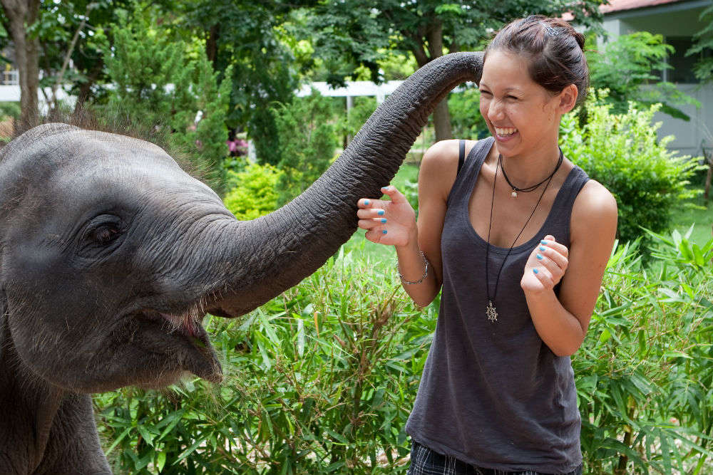 Elephants galore, the perfect trip for Delhi's animal lovers