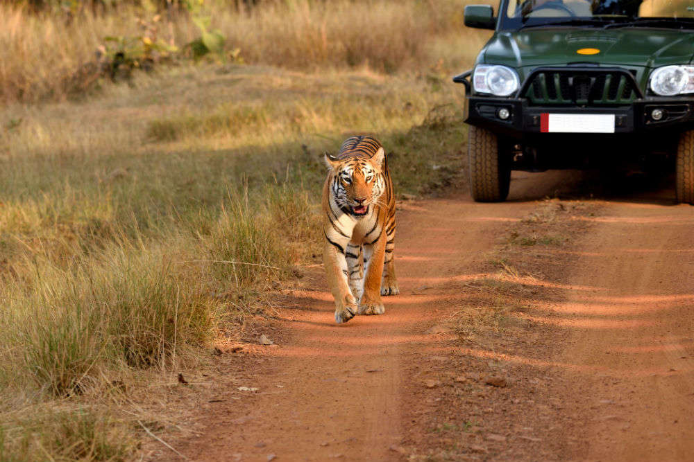 Soon, Andhra Pradesh to get three tiger safari parks