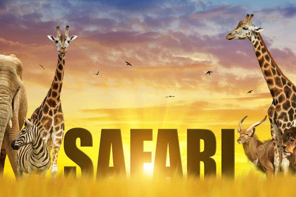 Summer safari―incredible safari trips in India