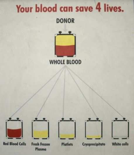On World Blood Donor Day A Look At The Benefits Of Being A Blood Donor India News Times Of India