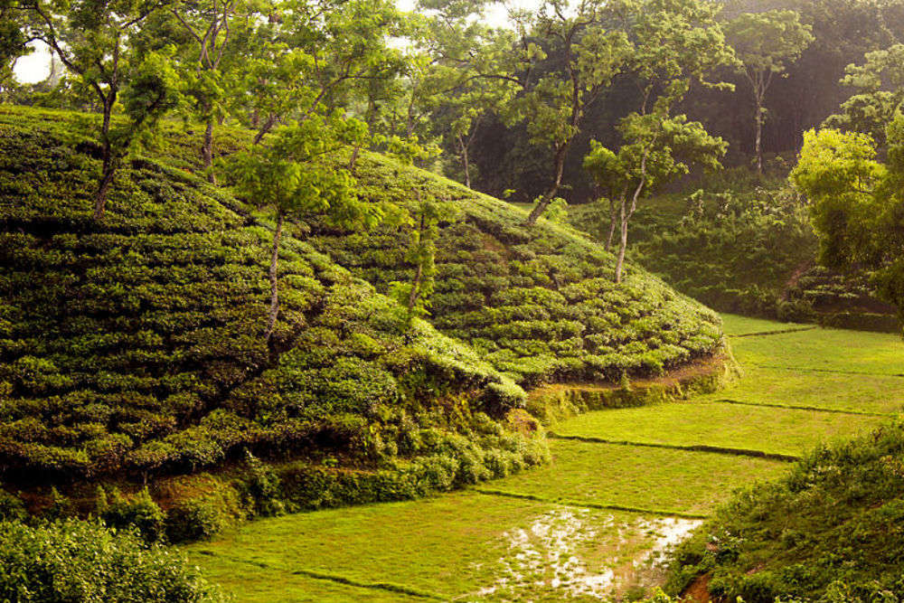 Of Sylhet's seven-layer tea and more
