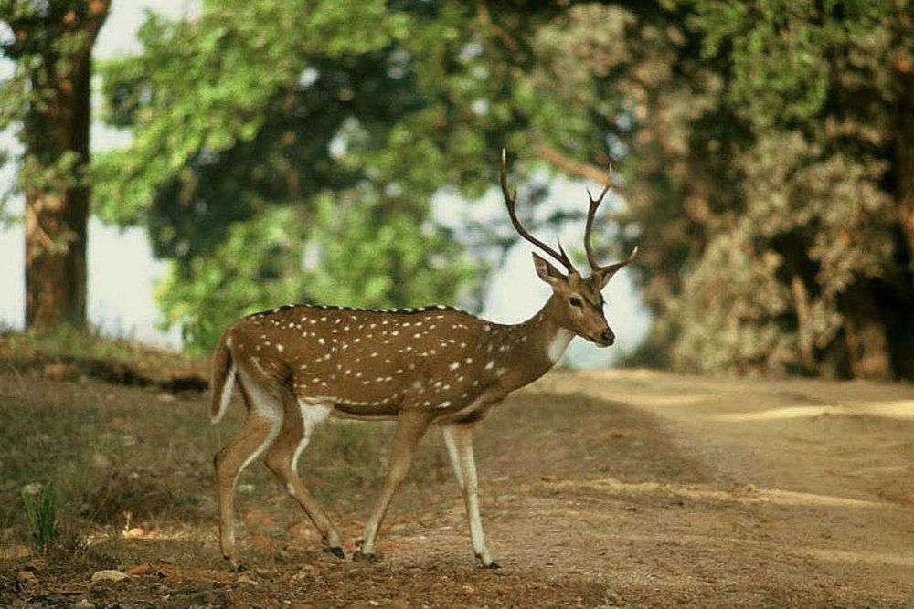 Etawah Safari Park may open its doors for tourists this October