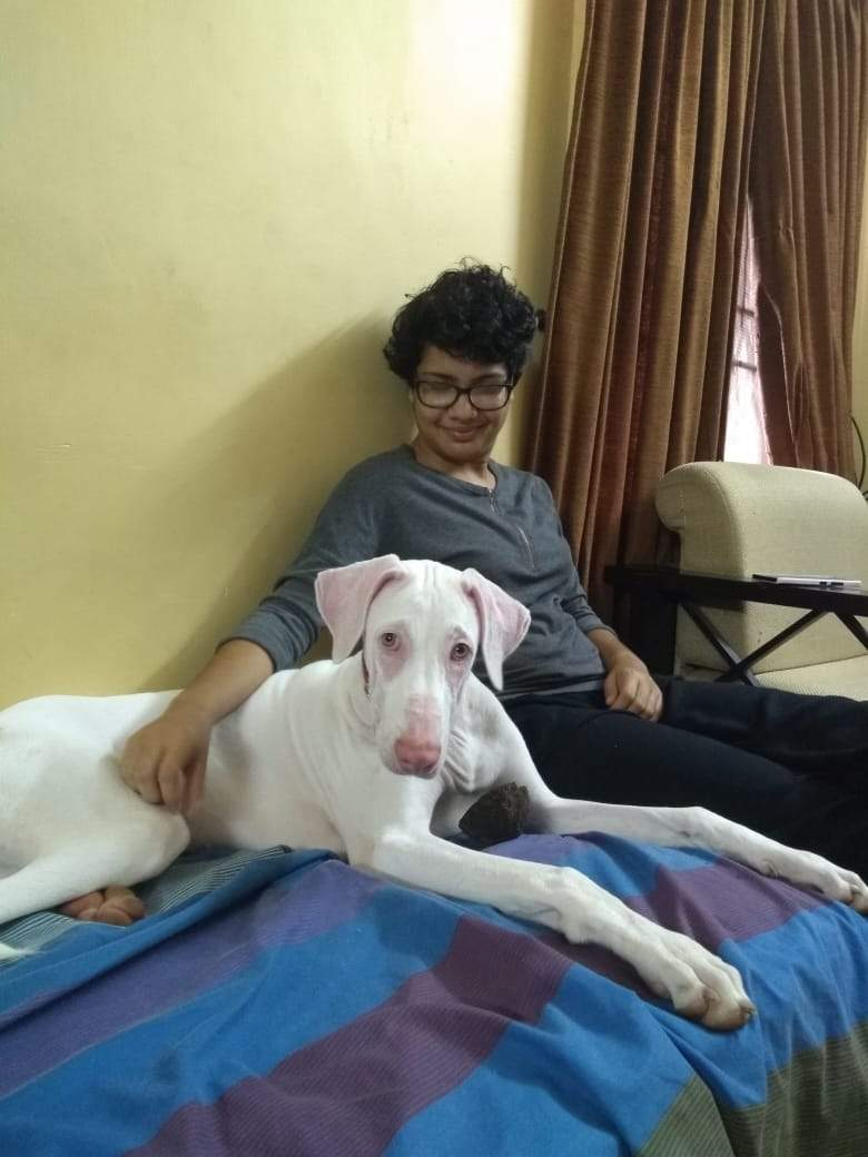 I have never come across a breed as loving as the Rajapalayam