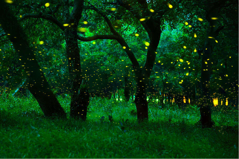 Purushwadi, a village full of fireflies in Maharashtra