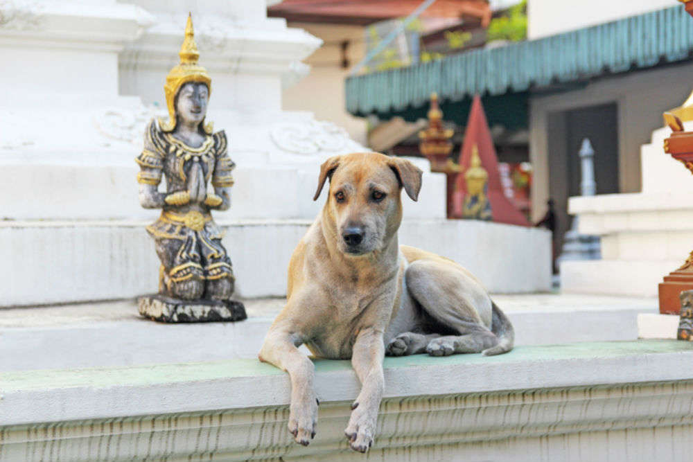 Do you know about the Channapatna Dog Temple in Karnataka?