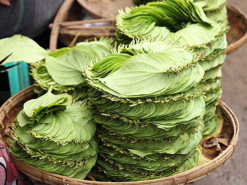 Why Eating Betel Leaf Daily Is A Healthy Practice