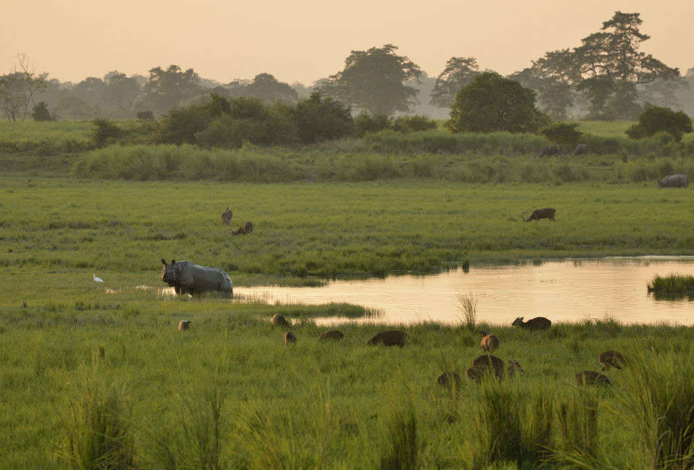 Kaziranga National Park might remain partially open for tourists this Durga Puja