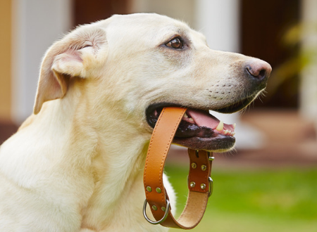 What you have to know before you put a collar on your pet dog