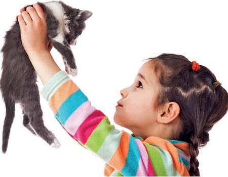 Welcoming your new kitten...