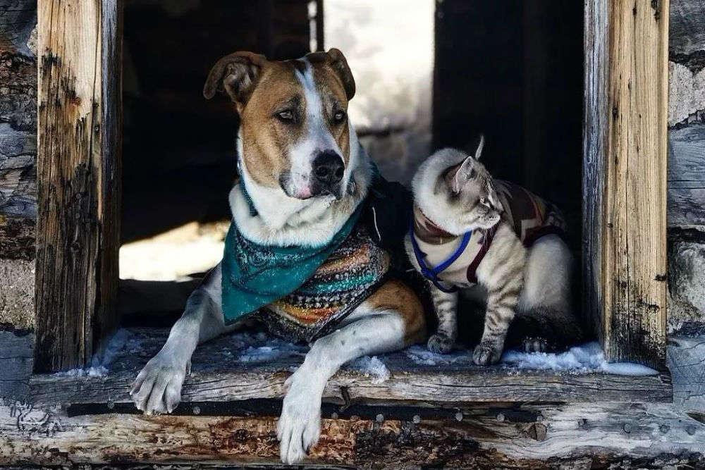 Meet Henry and Ballo, the super cute dog and cat duo travelling together