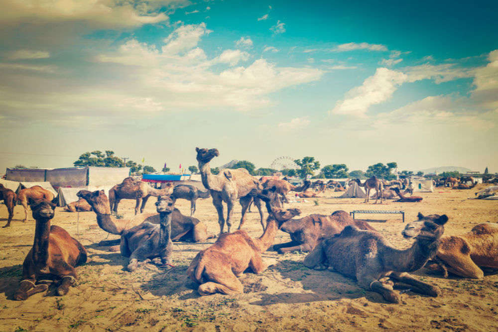 International Pushkar Fair: Everything you wanted to know