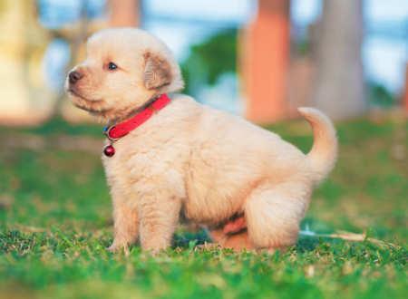 Can a dog's colour impact longevity?