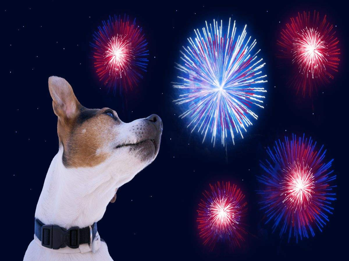 Keep your pets safe and stress-free this Deepavali