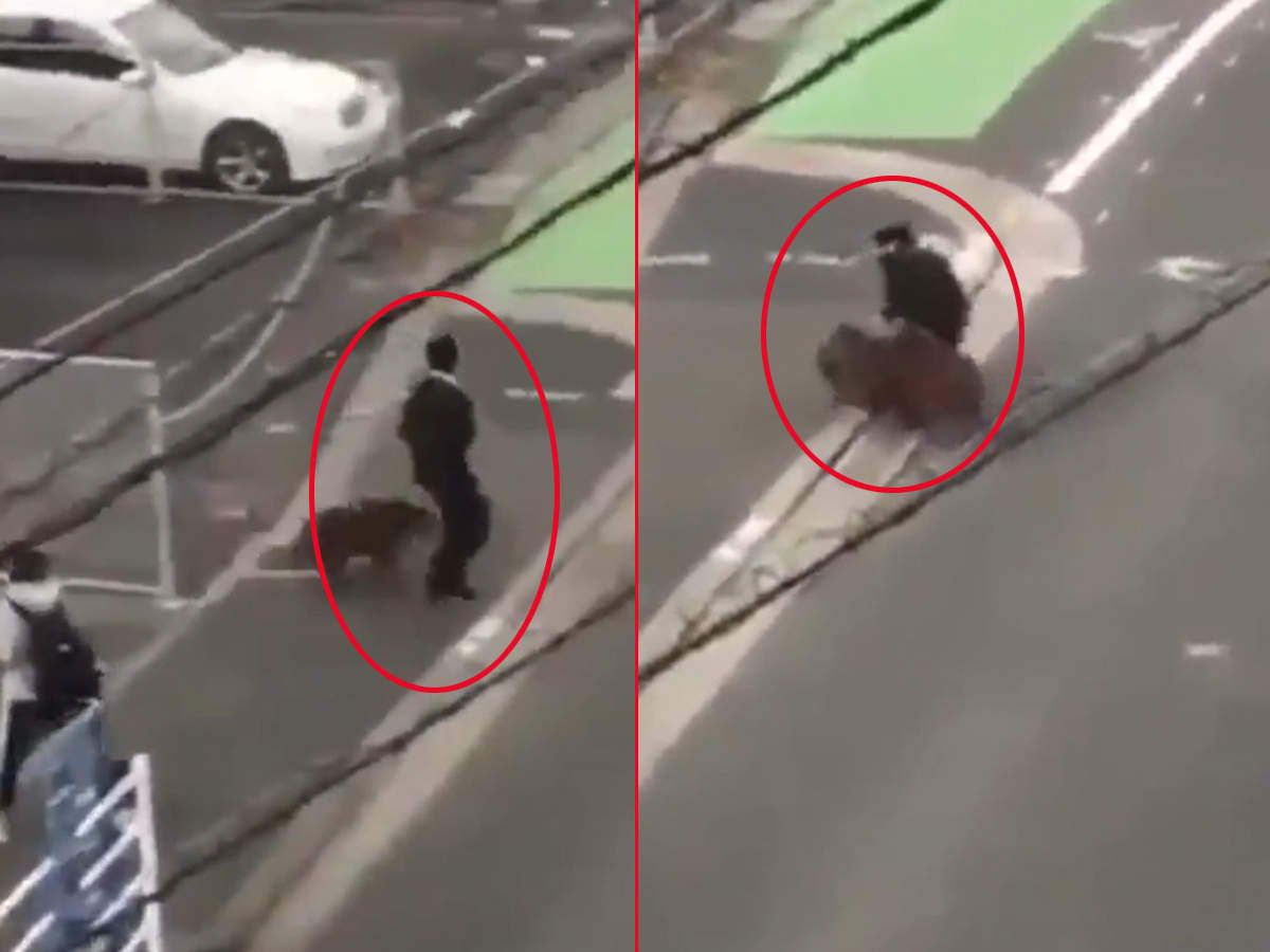 watch-man-on-way-to-work-attacked-by-wild-boar