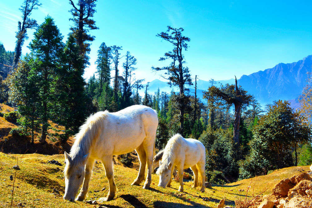 9 breathtaking pictures of the ancient hill station, Manali