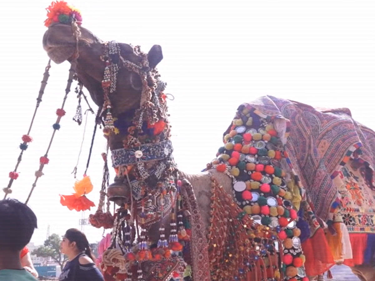 rajasthan-annual-pushkar-camel-fair-begins-tourists-arrive-to-witness-colourful-events