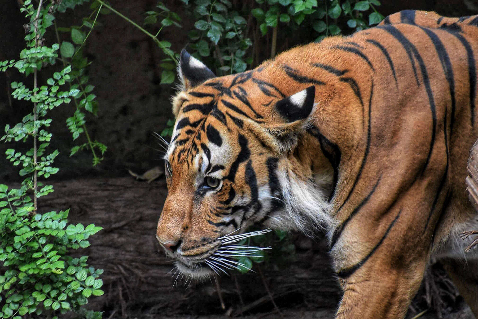 Bihar Tourism to promote ecotourism, starting with Valmiki Tiger Reserve