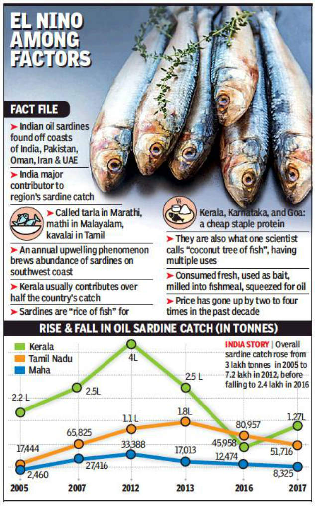 Fish Sardine Boom And Bust Fuels Steps For Conservation