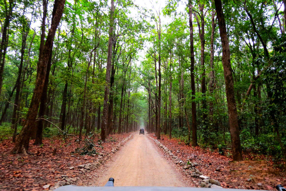 Tourists can look forward to new great developments in Corbett Tiger Reserve this January