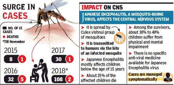 Pune: With 108 patients, Japanese encephalitis spreads