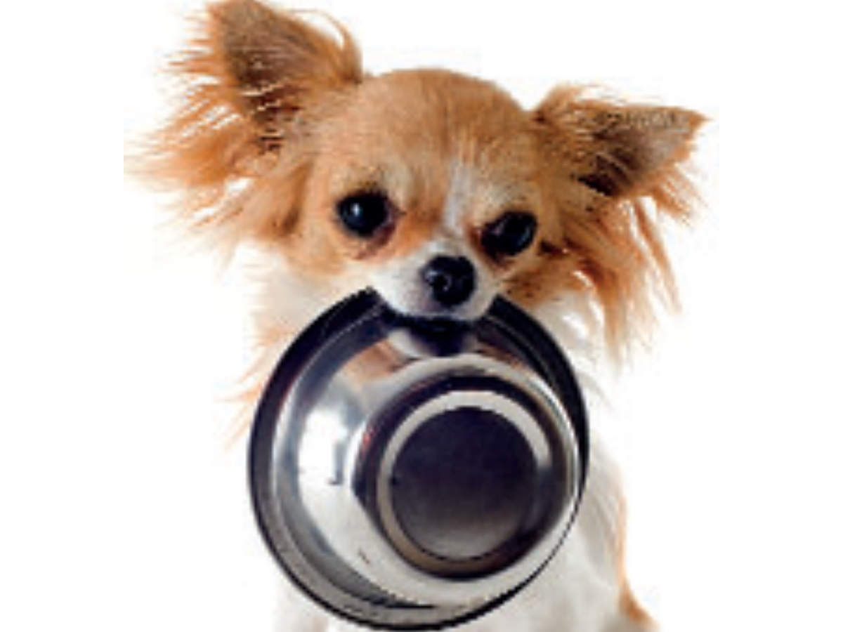 What, when and why to feed your pet
