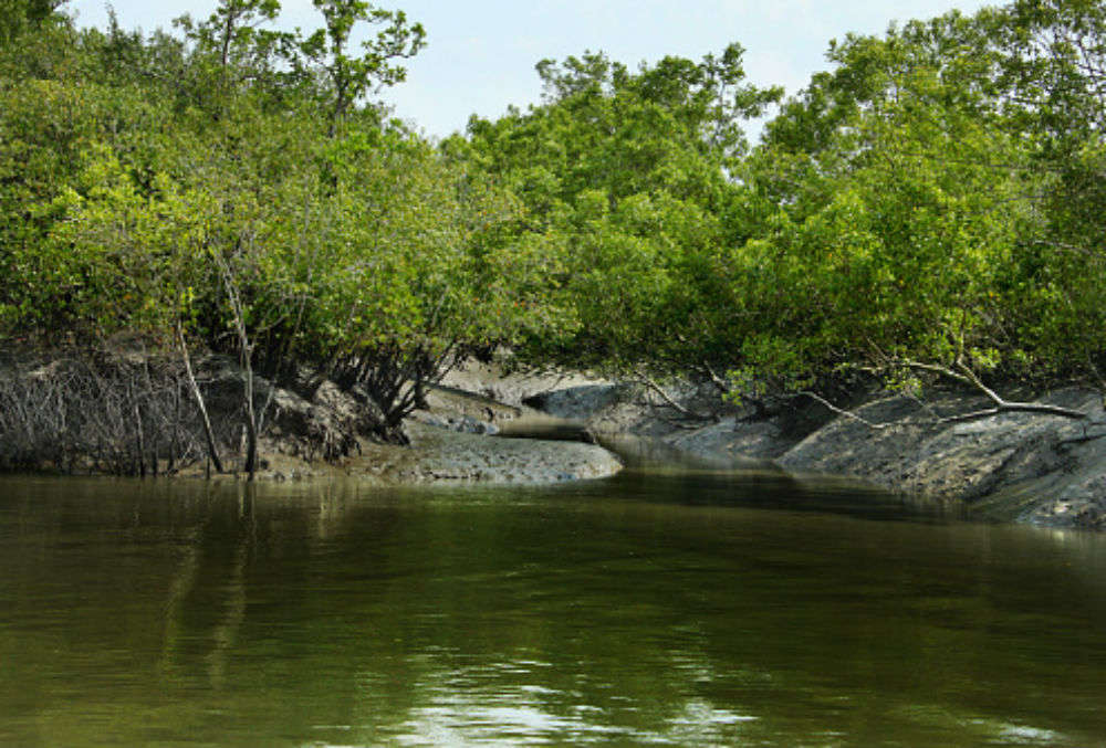 Sundarbans, which is 10 times bigger than the city of Venice, and its many facts