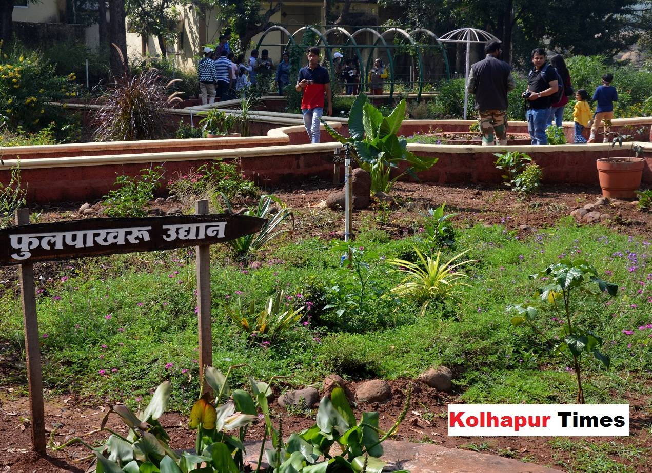 Kolhapur S Butterfly Garden Is Attracting Tourists And Locals Alike Events Movie News Times Of India